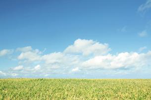 畑の写真素材 [FYI04750780]