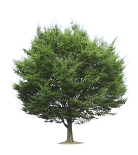 木/植物の写真素材 [FYI04750927]