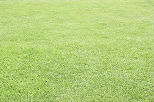 芝生の写真素材 [FYI04751187]