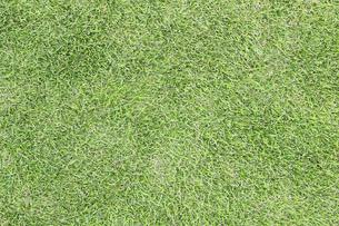 芝生の写真素材 [FYI04751200]