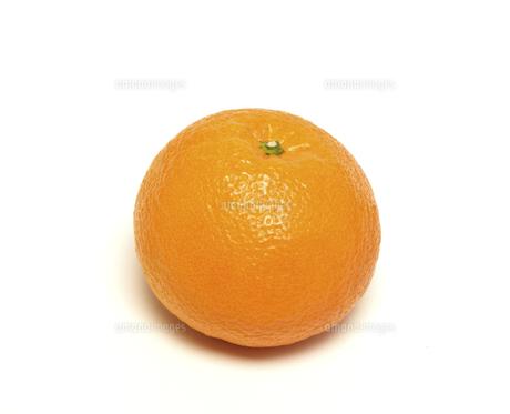 オレンジの写真素材 [FYI04751318]