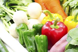 野菜集合の写真素材 [FYI04751769]