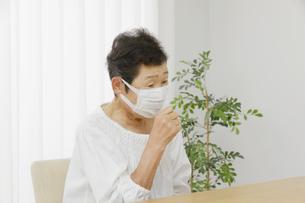 日本人シニア女性の写真素材 [FYI04758771]