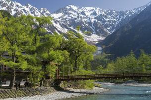 新緑の上高地 梓川と河童橋の写真素材 [FYI04759030]