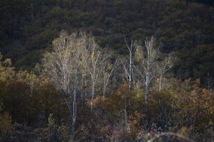 晩秋の乗鞍 一の瀬園地の写真素材 [FYI04759050]