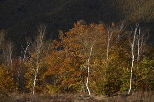 秋の乗鞍 一の瀬園地の写真素材 [FYI04759054]