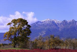 開田高原から見る御嶽、2020秋、その1の写真素材 [FYI04759366]