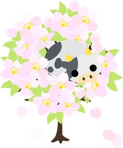 ぬいぐるみのようなころころ牛と桜のイラストのイラスト素材 [FYI04759374]