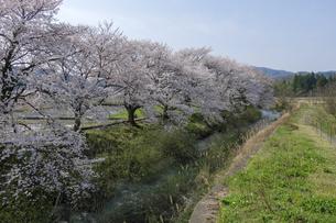 桜咲く田園の写真素材 [FYI04759501]