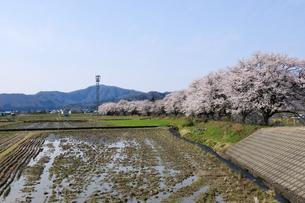 桜咲く田園の写真素材 [FYI04759502]