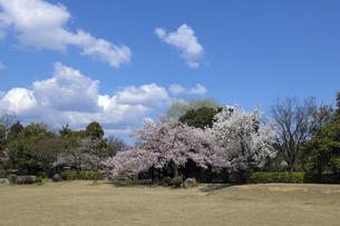 桜咲く式部公園の写真素材 [FYI04759518]