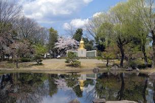 紫式部像と桜の写真素材 [FYI04759519]