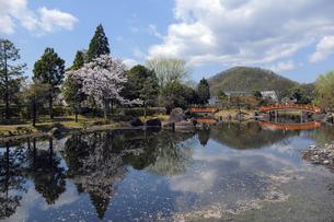 紫式部公園と池の写真素材 [FYI04759523]