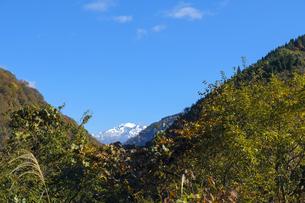 紅葉の山と白山の写真素材 [FYI04759542]