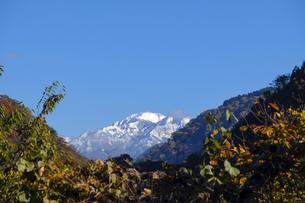 紅葉の山と白山の写真素材 [FYI04759543]