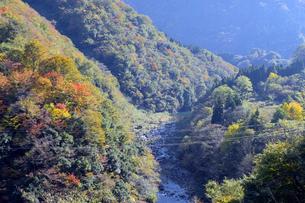 九頭竜峡の紅葉の写真素材 [FYI04759546]