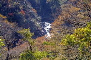 九頭竜峡の紅葉の写真素材 [FYI04759552]