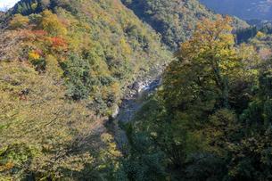 九頭竜峡の紅葉の写真素材 [FYI04759556]