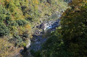 九頭竜峡の紅葉の写真素材 [FYI04759557]