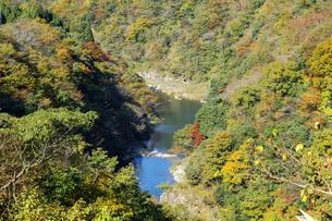 九頭竜峡の紅葉の写真素材 [FYI04759558]