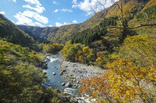 九頭竜峡の紅葉の写真素材 [FYI04759581]