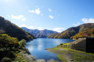九頭竜湖の紅葉の写真素材 [FYI04759583]