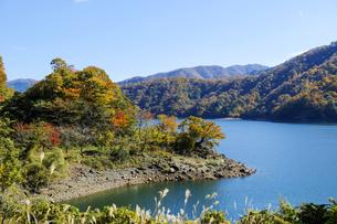 九頭竜湖の紅葉の写真素材 [FYI04759586]