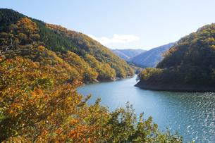 九頭竜湖の紅葉の写真素材 [FYI04759589]