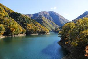 九頭竜湖の紅葉の写真素材 [FYI04759596]