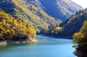 九頭竜湖の紅葉の写真素材 [FYI04759597]