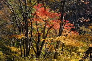 紅葉の木々の写真素材 [FYI04759598]