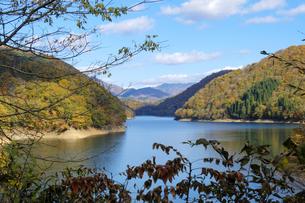 九頭竜湖の紅葉の写真素材 [FYI04759599]