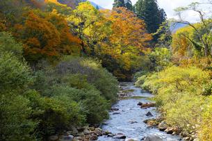 伊勢川の風景の写真素材 [FYI04759603]