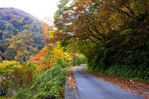 紅葉の林道の写真素材 [FYI04759604]