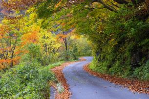 紅葉の林道の写真素材 [FYI04759606]