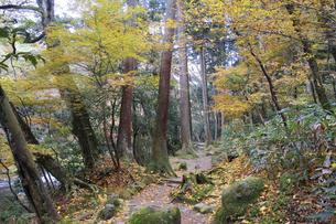 鶴仙渓遊歩道の写真素材 [FYI04759630]