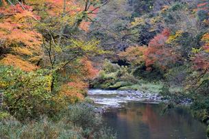 大聖寺川と紅葉の写真素材 [FYI04759634]