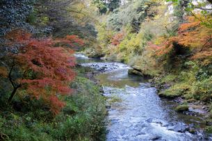 大聖寺川と紅葉の写真素材 [FYI04759635]