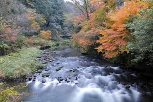 大聖寺川と紅葉の写真素材 [FYI04759637]