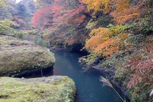 大聖寺川と紅葉の写真素材 [FYI04759640]