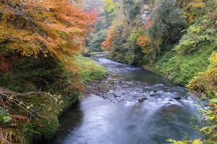 大聖寺川と紅葉の写真素材 [FYI04759641]