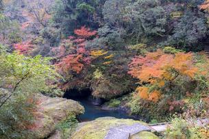 大聖寺川と紅葉の写真素材 [FYI04759643]