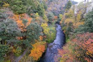 大聖寺川と紅葉の写真素材 [FYI04759645]