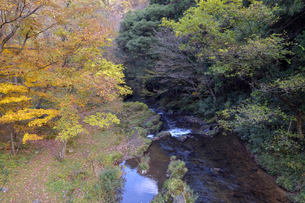 荒俣峡の紅葉の写真素材 [FYI04759658]