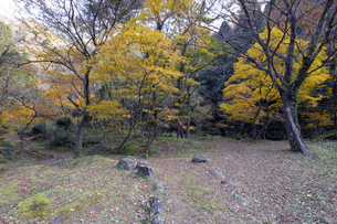 荒俣峡の紅葉の写真素材 [FYI04759659]