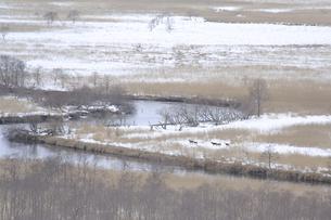 釧路湿原に住むの写真素材 [FYI04759668]