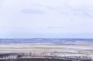 釧路湿原 冬鳥の写真素材 [FYI04759670]