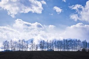 防風林と雲の写真素材 [FYI04759781]