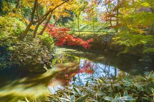 彩り豊かな盛秋の六義園の写真素材 [FYI04759785]