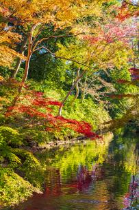 彩り豊かな盛秋の六義園の写真素材 [FYI04759788]